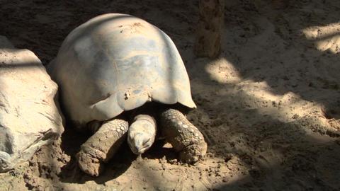 tortoise 02 Live Action