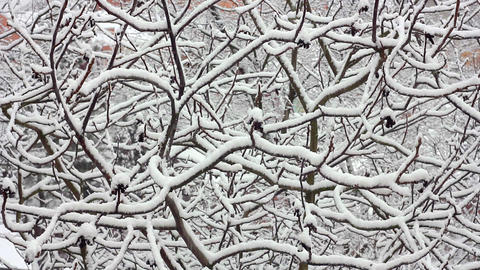 Trees in Snow 15 Stock Video Footage