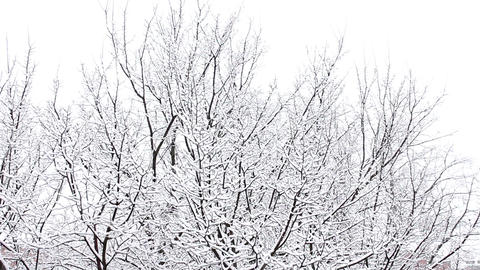 Trees in Snow 17 Stock Video Footage