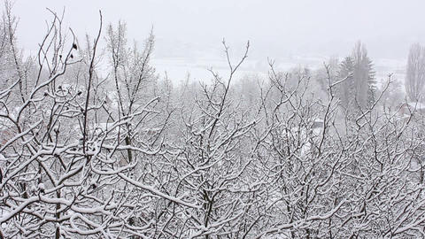 Trees in Snow 19 Stock Video Footage