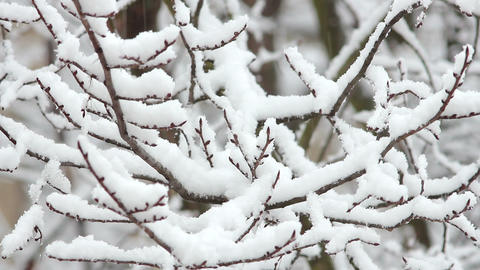 Trees in Snow 21 Stock Video Footage