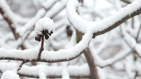 Trees in Snow 23 Stock Video Footage