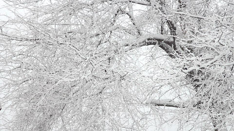 Trees in Snow 25 Stock Video Footage