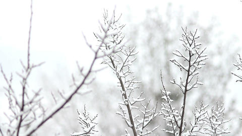 Trees in Snow 27 Stock Video Footage
