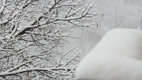 Trees in Snow 29 Stock Video Footage
