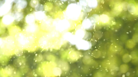 Solar pollen Stock Video Footage