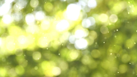 Solar pollen Stock Video Footage