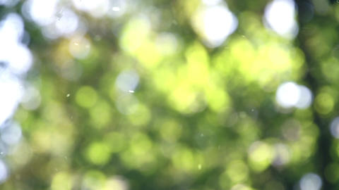 Weightless pollen Stock Video Footage
