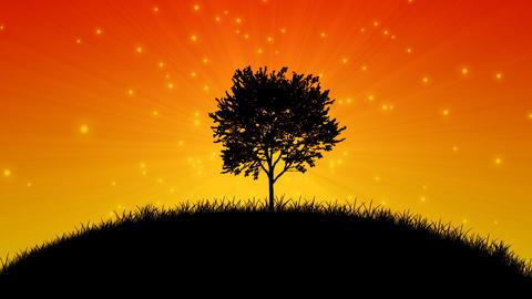 Magic Tree HD stock footage