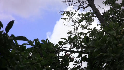 Dry twigs in the wind and cloudy sky 02 Footage