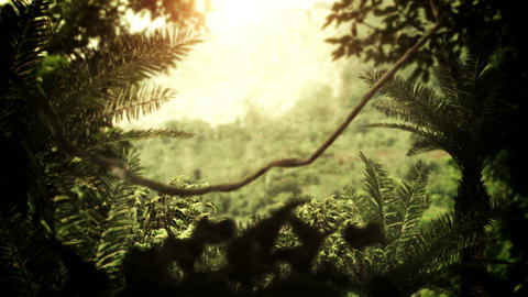 Jungle / Rain Forest Animation