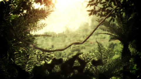 Jungle / Rain Forest Animation