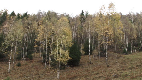 Autumn landscape in the forest 02 Footage
