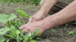 Gardener who works in the garden 03d Footage