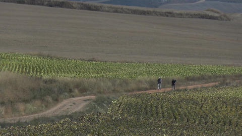 Pilgrim on the Camino de Santiago 09 Footage