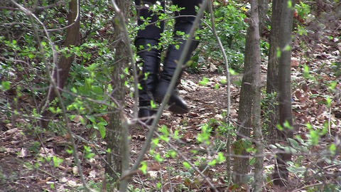 Steps Through The Woods 03 stock footage