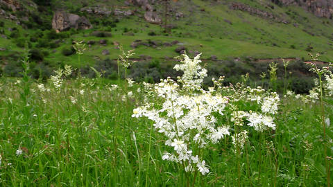 Types Of Blooming Wildflowers In The Meadow, Minifilm stock footage