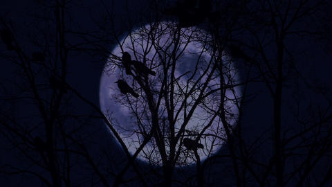 Crows on branches in the moonlit night Animation