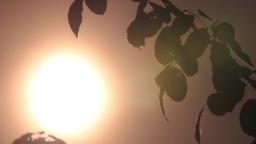 Sunset 56 Footage