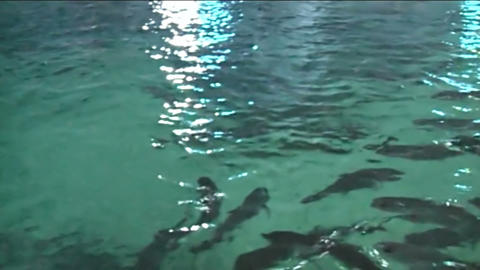 Fish In The Oceanarium. Marine Life stock footage