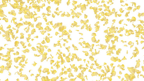 Rose petals yellow falling A 4 K Animation