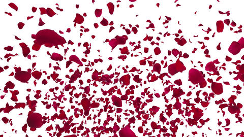 Rose petals red fountain A 4 K Animation