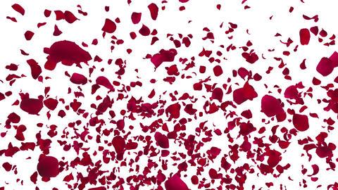 Rose petals red fountain A 4 K CG動画