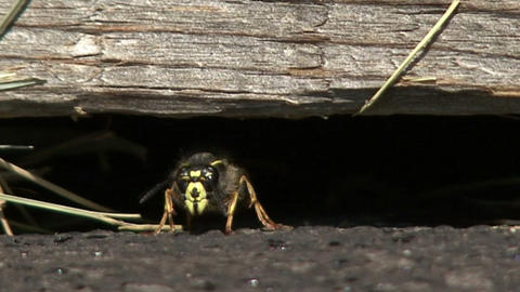 hive bee, nest box, insect locust Footage