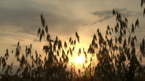 Sunset In Field stock footage