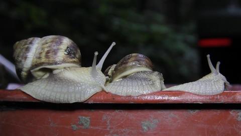 Garden snails 04 Live Action