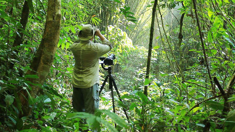 Wildlife Photographer working in rain forest jungle Live Action