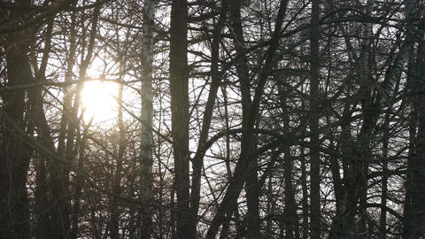 A Ray Of Sunshine In Spring Forest ,4k stock footage
