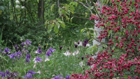 Last spring flowers 01 Footage