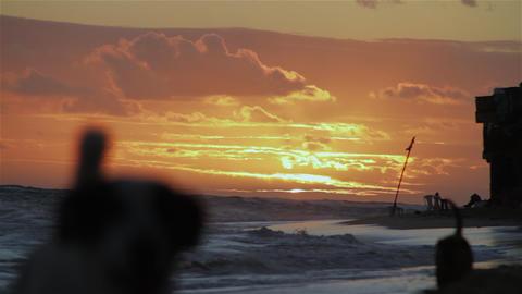 Dogs Walking On Beach stock footage