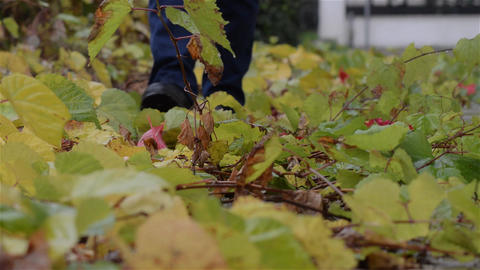 Man stepping on twigs with leaves Footage