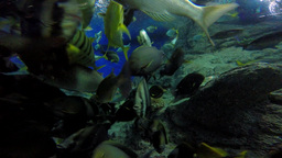 4K Variety Of Marine Fish Species Gathered Together At Feeding Time stock footage