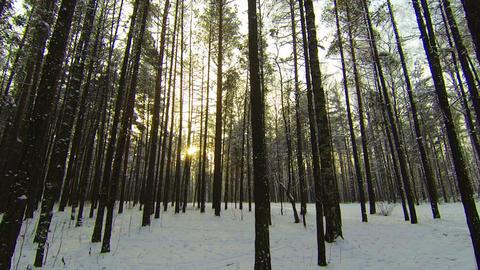 Winter Forest Footage