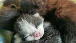 New born kittens (9) Footage