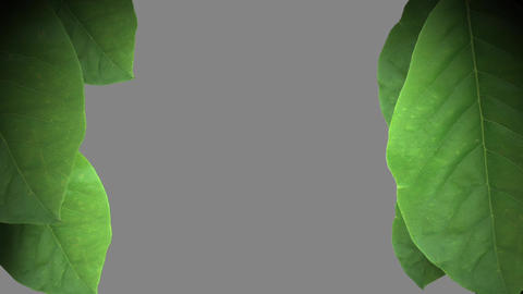Leaves Transition Animation