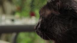 Cat 12 Footage