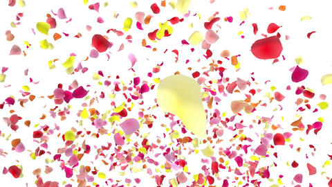 Flower petals pink fountain A 4 K Animation