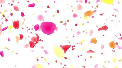 Flower petals pink tornado Bw 4 K Animation