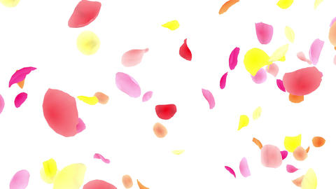 Flower petals pink tornado G 2w 4 K Animation