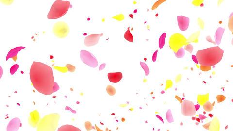 Flower petals pink tornado G 2w 2 4 K Animation