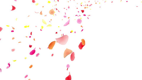 Flower petals pink tornado Jb 4 K Animation