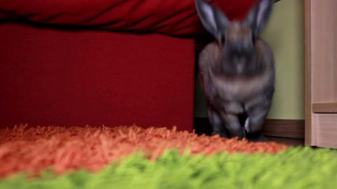 Gray rabbit jumping towards camera Stock Video Footage