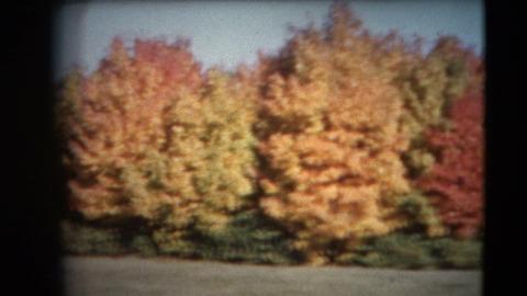 8mm Vintage - 60's Autumn Colors Pan Footage