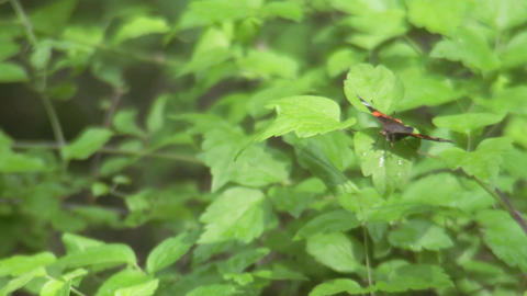 Butterfly Flying Off stock footage