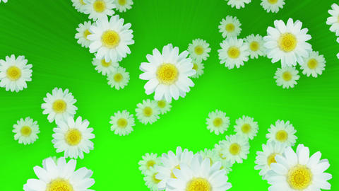 Spring Summer Daisies Green Animation