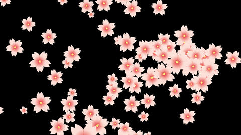 full bloom and opens Animation